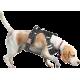 Harnais Anti-traction pour chien
